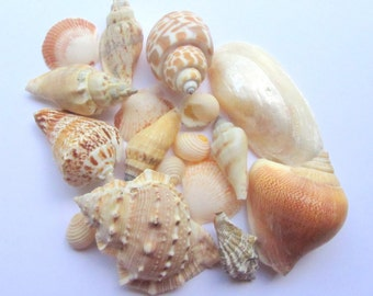 Beach Wedding Decor Seashells -   Beach Wedding Sea Shell Mix - 1 lb Assorted Shell Mix - Bulk Shells