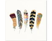 Feather Art - Archival Print - Watercolor Feathers - Nature Art