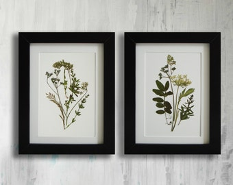 Framed Set of 2 herbarium botanical prints artworks Real pressed flowers Modern wall art Dry flower decor Unique art set framed wall art