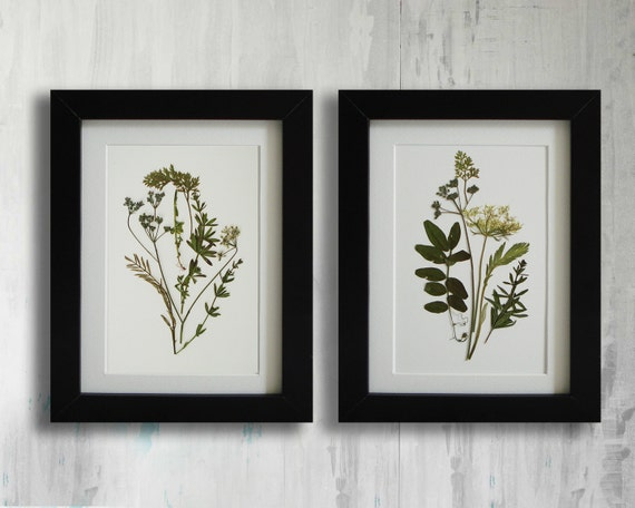 19 Framed Set Of 2 Herbarium Fringecup
