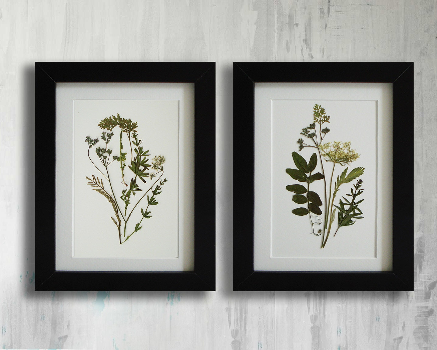 Framed set of 2 herbarium botanical prints artworks real for Wall of framed pictures
