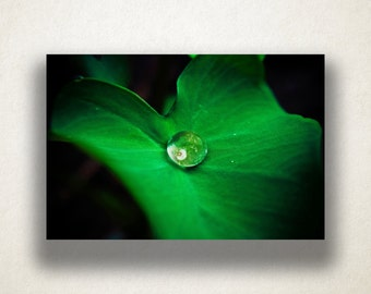 Waterdrop on Leaf Canvas Art, Artistic Leaf Close Up Wall Art, Plant Canvas Print, Photograph, Canvas Print, Home Art, Wall Art Canvas