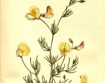 Nature print, Nature decor, Flower print art, Antique print, Flower art, Wall decor, Nature art, Botanical, Vintage poster, 344