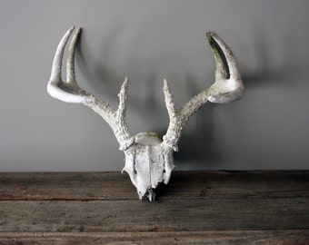 8 Point Set of Vintage Natural Sun Bleached Deer Antlers