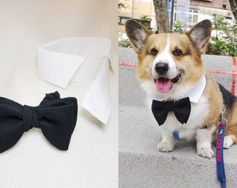 Small dog detachable bow tie and shirt collar set Black butterfly bowtie & white point collar for small dog wedding ring bearer (SM-SL)
