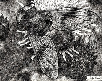 Original Hoverfly Drawing, Pen & Ink