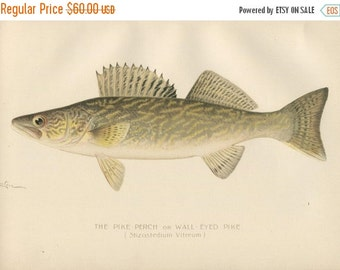 SALE ANTIQUE DENTON Lithograph - Original Bookplate - Circa 1902 - Fish - Artist Sherman F Denton - Angler - Fisherman - Fishing - Pike Perc