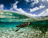 Over Under Photo of Baby Hawksbill - Baby Sea Turtle Photo Collection - Large Wall Art - Ocean & Beach Decor