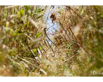 Through the Weeds Photograph