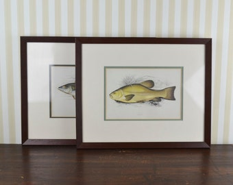 Vintage Set of 2 Framed Prints