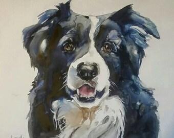 Border Collie, pet portraits, collies, collie painting, dog art, dog portraits, black and white portraits
