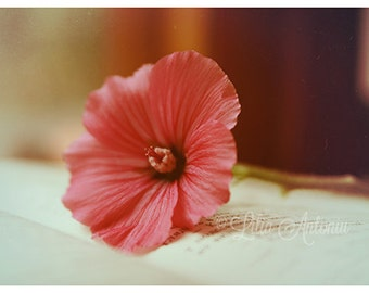 Fine art Photography Pink Flower Romantic wall decor Sepia fine print Still Life fine art photo Nature color photography Book Poetry Artwork