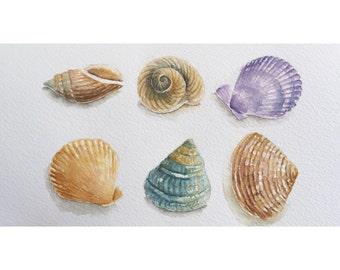 Watercolor original painting - sea shells painting ,wall decor , watercolor art - decorative art