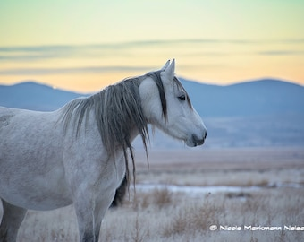 A look back ~ Wild Mustang Mare ~ Wild mustang ~ Wild Horses ~Equine Art ~ Horse Photography