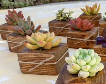 100 Succulent WEDDING Favors, Succulent Bridal Shower favor, Baby shower favor, Special Event Favor, Spring or summer