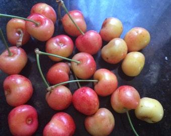 Yellow cherry cut, fruit tree, cutting