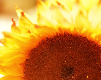 """Sunflower Flower Photo Art Print :  Fine Art Photography, Colour Nature Macro Photography - """"I Am On Fire"""" (Also in Gallery Wrapped Canvas)"""