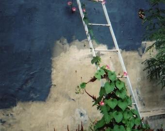 Ladder Trellis with Climbing Flowers