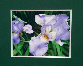 PURPLE IRIS Botanical Wall Art by Pam Ponsart of Pam's Fab Photos; a perfect size for Home, Cubicle or Office