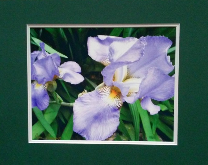 IRIS Photo Print: Wall Art for Home or Office; matted and frame-ready