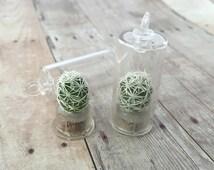 Living Golf Ball Cactus Terrarium Necklace Pendant Plant Round Capsule Succulent Charm Mammillaria herrerae Floating Plant Jewelry Supplies