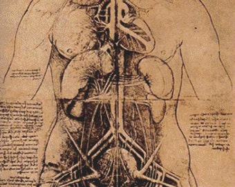 Drawing Of A Woman's Torso PDF Cross Stitch Pattern