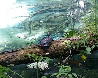 Turtle on Fallen Tree Near Water