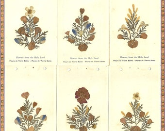 Flowers From The Holy Land - Pressed Dried Flowers- Illustrated Souviner Cards - 1900 - 1909