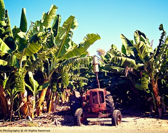 For Him Banana Plantation Natures Scenic Landscape Photography farming wall art deco vintage Red tractor beautiful cuban scene