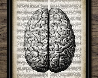 Vintage Human Brain Print On Dictionary Page Background - Human Brain Anatomy Illustration - Science - Single Print #1307 - INSTANT DOWNLOAD