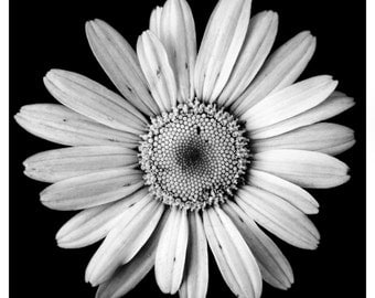 Black & White Photography, Floral Photographs, Flower Photographs, Nature Prints, Print Set, Flower Prints, Photo Prints, Floral Wall Art