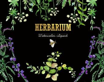 Herbarium. Watercolor Clipart peinte à la main. Aquarelle. Floral plants: dill, thistle,bee green branch