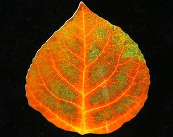 Green & Red Aspen Leaf Barrette 1