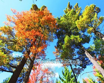 Autumn Nature Photography | Wooded Landscape | Trees | Fall Color | Northern Michigan Pine Woods | Colorful Orange Blue Green Outdoor Print