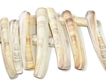 30 small white razor clam shells,beach decor,beach craft supply,shell craft,long clam shells,jackknife clam shells,knife clams, sea shells