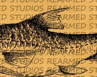 Vintage Fish V.2 Vector Image - INSTANT DOWNLOAD