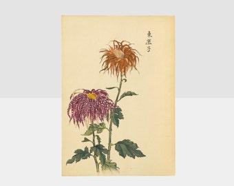 100 chrysanthemums by keika hasegawa, chrysanthemum orange by keika, original japanese woodblock print, 100 chrysanthemums by keika,