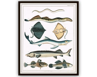 19th Century Fish Original Engraving Hand Colored