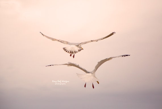 Seagulls in Maine Beach Fine Art Photograph 5x7 8x10 11x14