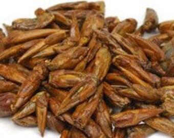 Balm of Gilead Buds - Certified Organic