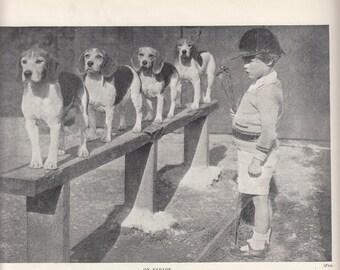 "Dog Print/  Beagles Training And on Parade/8"" X 10.5""/ 1937"