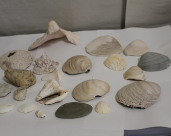 SALE: Whole Vintage Sea Shells, Look Carefully at Them,  in All, Includes 16 Almost Perfect, Nautical Decoration, Collectible, NICE