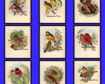 9 piece Bird print set from the 1800's.  These are 8x10 prints
