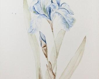 flower watercolor _ original 8x10 blue tulip watercolor