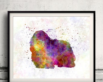 Coton de Tulear 01 in watercolor - Fine Art Print Poster Decor Home Watercolor Illustration Dog - SKU 1625