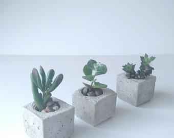 Trio of Mini Concrete Succulent Planters