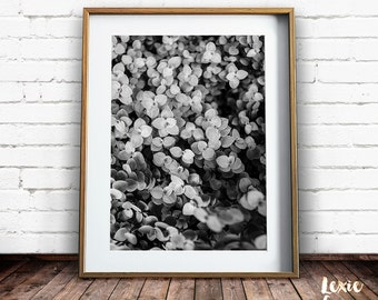Black and White Plant Print, Leaf Print, Garden Print, Nature Photography, Black and White Photo, Leaf Print, Printable Art, Nature Decor