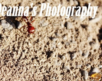 Red Ant by Deanna Bernal