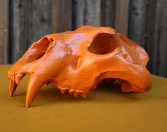 Reconstitution skull (legal sale) Orange Bengal tiger