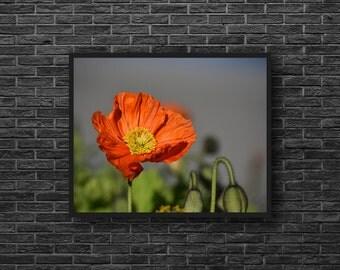 Poppy Photo - Red Poppy Photo - Red Flower - Red - Flowers Photo - Botanical Photo - Paper Photo Print - Flower Wall Art - Flower Wall Decor